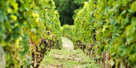 varmande-viner-fran-rhonedalen